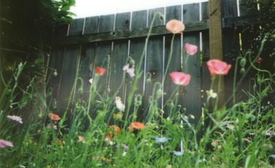 Instax meadow4