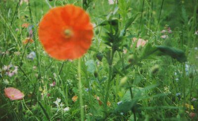 Instax meadow2