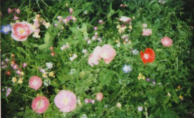 Instax meadow