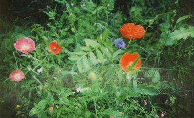 Instax meadow3