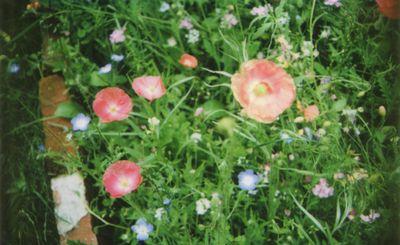 Instax meadow 6