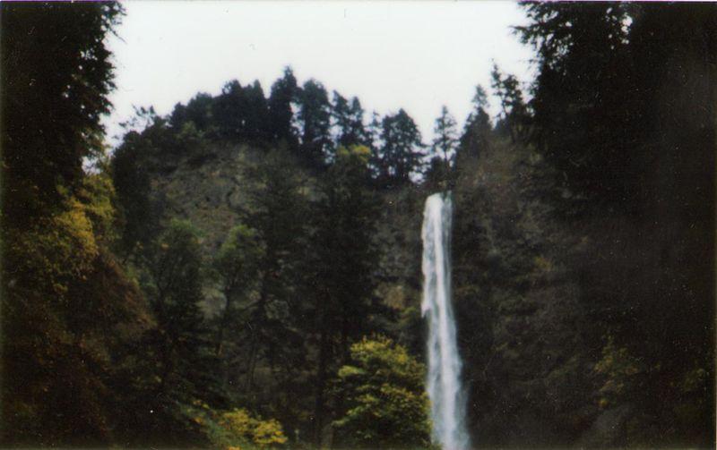 ForestFalls